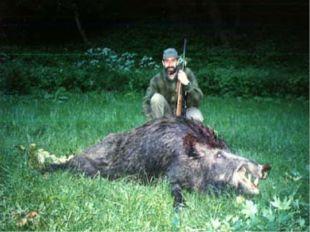 Охота Многие животные дают человеку ценную пушнину ,кожу, мясо. Хищническое и