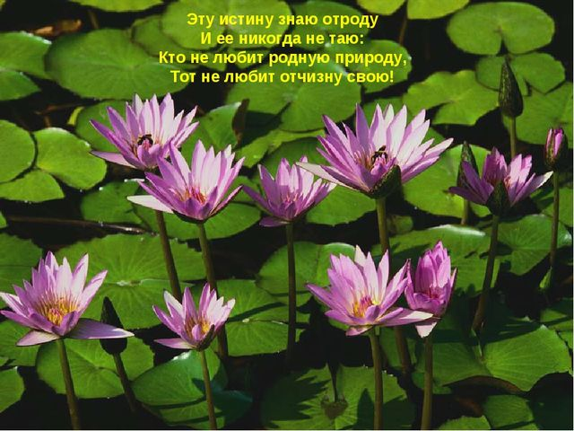 Эту истину знаю отроду И ее никогда не таю: Кто не любит родную природу, Тот...