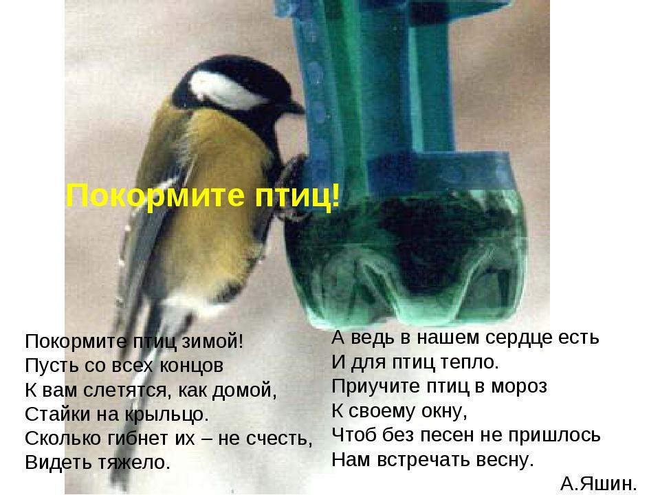 Покормите птиц! А ведь в нашем сердце есть И для птиц тепло. Приучите птиц в...