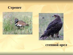 Стрепет степной орел