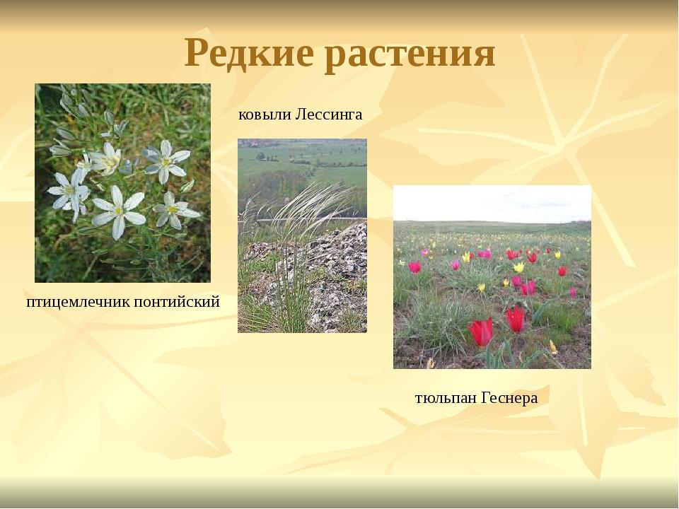 Редкие растения птицемлечник понтийский ковыли Лессинга тюльпан Геснера