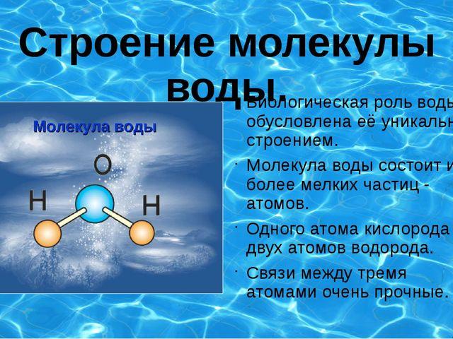 Строение молекулы воды. Биологическая роль воды обусловлена её уникальным стр...