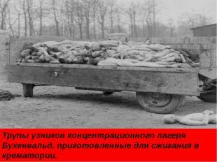 Трупы узников концентрационного лагеря Бухенвальд, приготовленные для сжигани