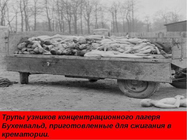 Трупы узников концентрационного лагеря Бухенвальд, приготовленные для сжигани...