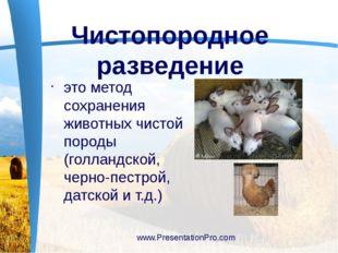 это метод сохранения животных чистой породы (голландской, черно-пестрой, дат