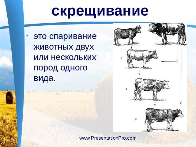 это спаривание животных двух или нескольких пород одного вида. www.Presentat...