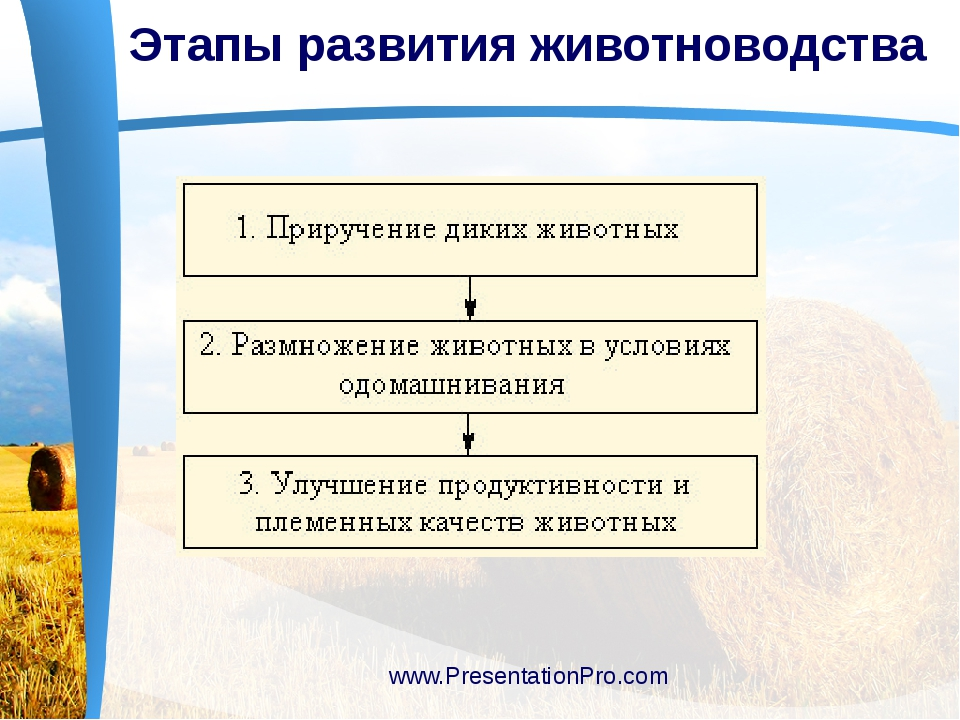 Этапы развития животноводства www.PresentationPro.com