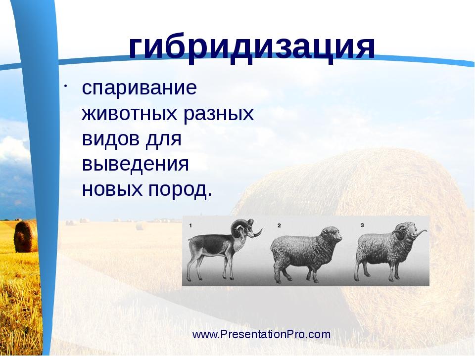 спаривание животных разных видов для выведения новых пород. www.Presentation...