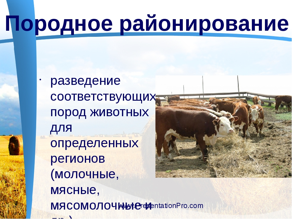 разведение соответствующих пород животных для определенных регионов (молочны...
