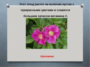 Этот плод растет на колючих кустах с прекрасными цветами и славится большим з
