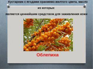 Кустарник с ягодами оранжево-желтого цвета, масло из которых является ценнейш