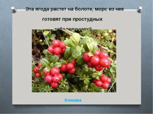 Эта ягода растет на болоте, морс из нее готовят при простудных заболеваниях?