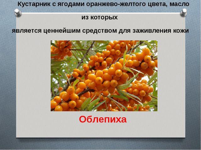Кустарник с ягодами оранжево-желтого цвета, масло из которых является ценнейш...