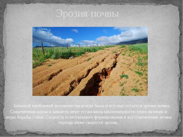 Большой проблемой человечества всегда была и всё ещё остаётсяэрозия почвы....