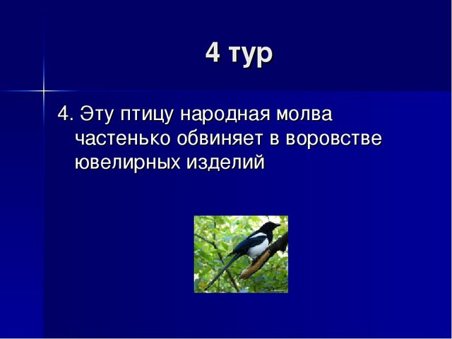 4 тур 4. Эту птицу народная молва частенько обвиняет в воровстве ювелирных из...