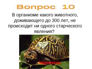 В организме какого животного, доживающего до 300 лет, не происходит ни одного