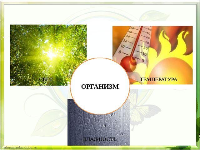 ОРГАНИЗМ СВЕТ ТЕМПЕРАТУРА ВЛАЖНОСТЬ