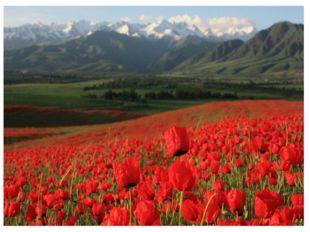 Арарат – главная вершина Армянского нагорья, расположенного на правобережье р