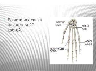 В кисти человека находится 27 костей.
