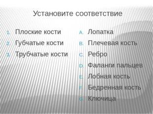 Установите соответствие Плоские кости Губчатые кости Трубчатые кости Лопатка