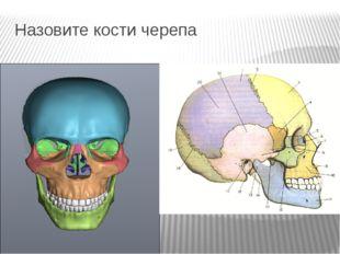 Назовите кости черепа