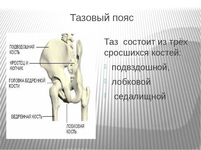 Тазовый пояс Таз состоит из трёх сросшихся костей: подвздошной, лобковой седа...