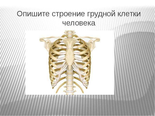 Опишите строение грудной клетки человека