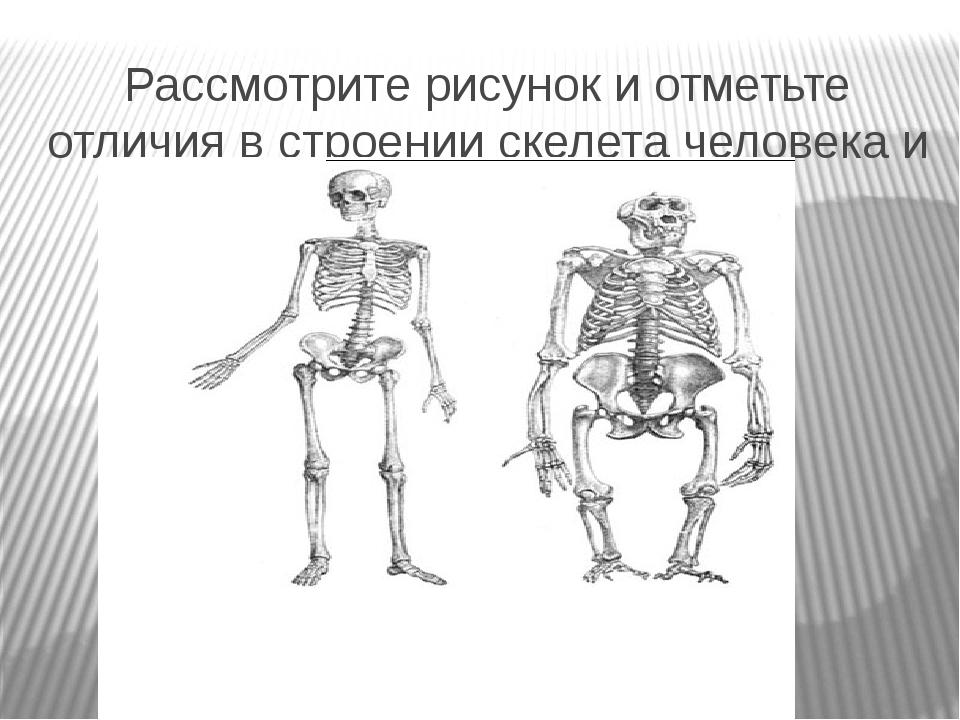 Рассмотрите рисунок и отметьте отличия в строении скелета человека и млекопит...