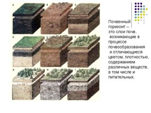 Почвенный горизонт – это слои почв, возникающие в процессе почвообразования и
