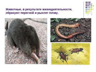Животные, в результате жизнедеятельности, образуют перегной и рыхлят почву.