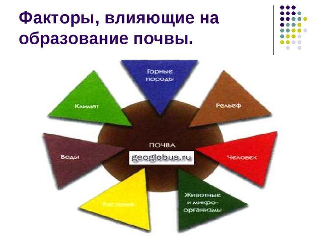 Факторы, влияющие на образование почвы.