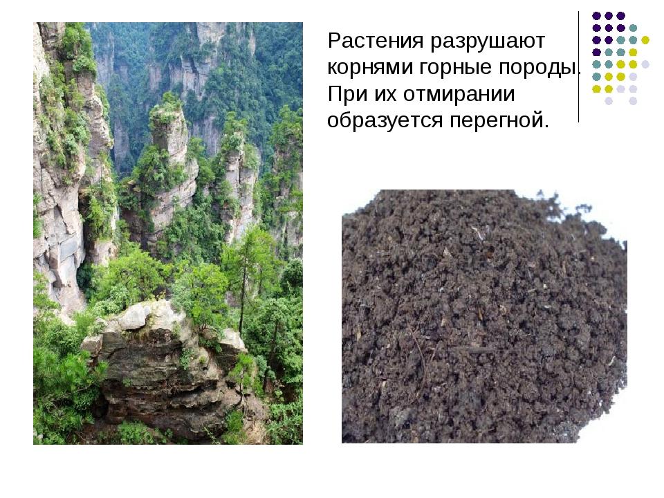 Растения разрушают корнями горные породы. При их отмирании образуется перегной.
