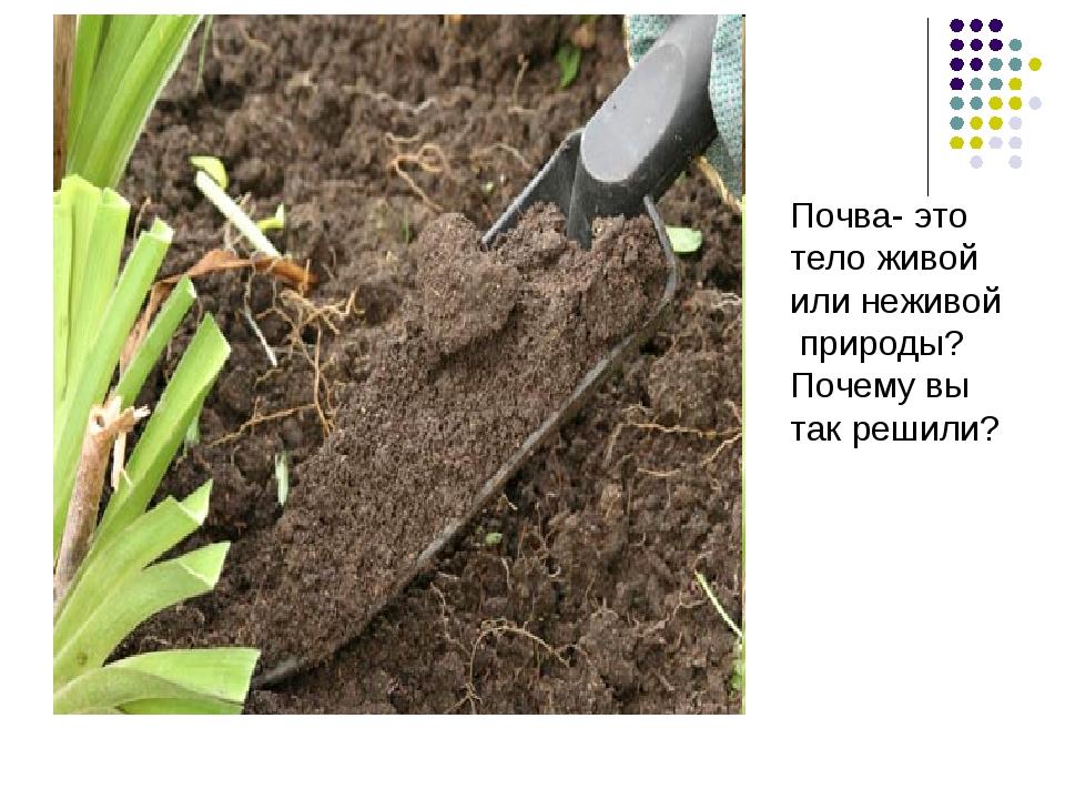 Почва- это тело живой или неживой природы? Почему вы так решили?