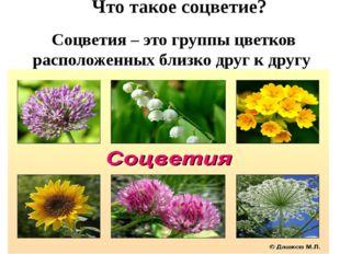 Соцветия – это группы цветков расположенных близко друг к другу Что такое со