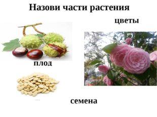 плод цветы семена Назови части растения