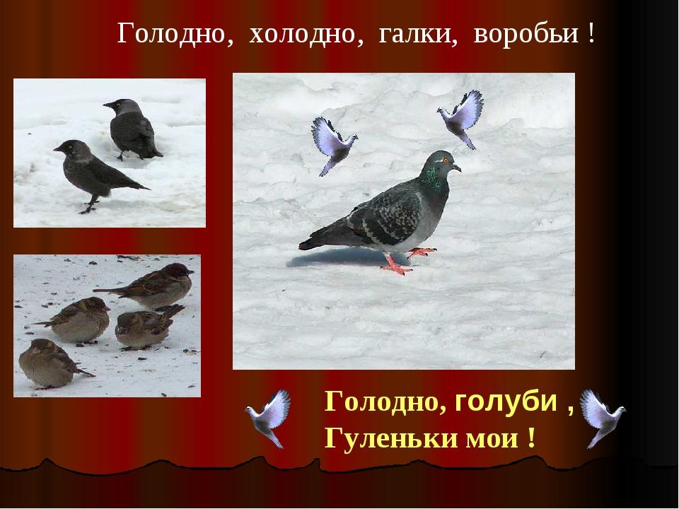 Голодно, голуби , Гуленьки мои ! Голуби Голодно, холодно, галки, воробьи !