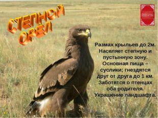 Размах крыльев до 2м. Населяет степную и пустынную зону. Основная пища – сусл