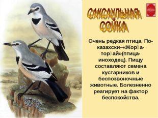 Очень редкая птица. По-казахски–«Жорға-торғай»(птица-иноходец). Пищу составля