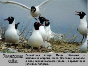 Перелётная птица. Места обитания – небольшие острова, озёра. Оперение на голо