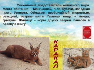 Уникальный представитель животного мира. Места обитания – Мангышлак, п-ов Бу