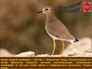 Кулик средних размеров – 120-140 г. Перелётная птица. Распространена по всему