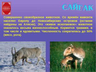 Совершенно своеобразное животное. Со времён мамонта населял Европу до Новосиб