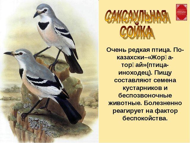Очень редкая птица. По-казахски–«Жорға-торғай»(птица-иноходец). Пищу составля...