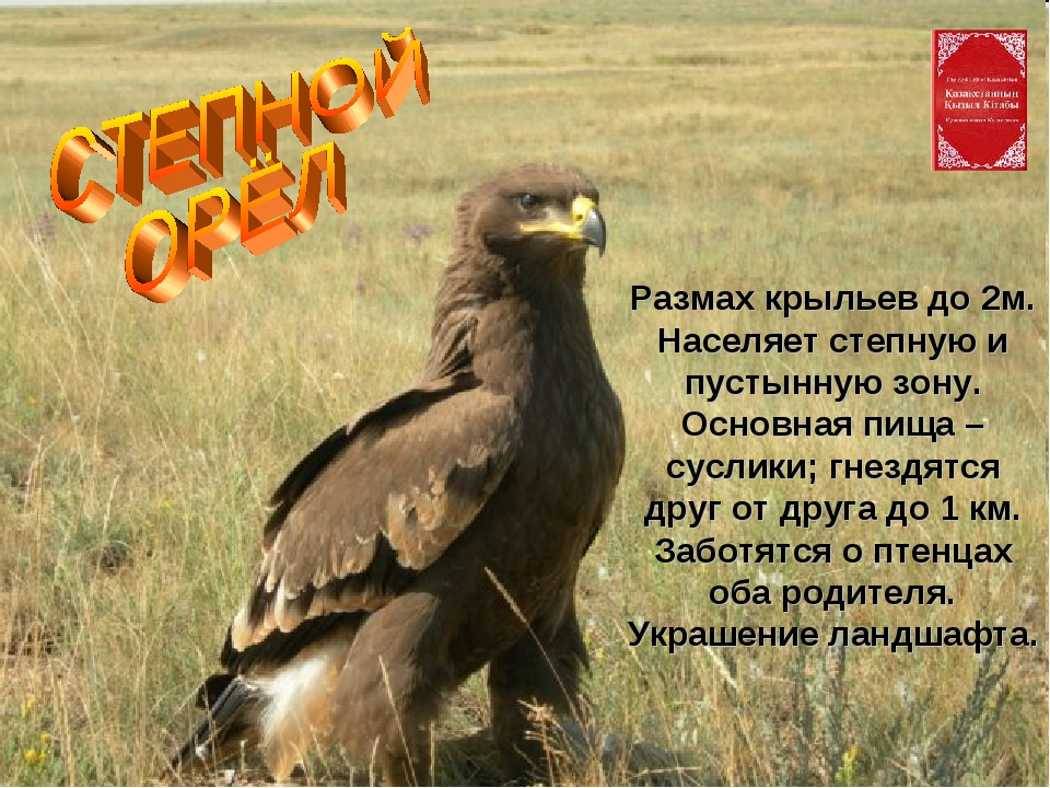 Размах крыльев до 2м. Населяет степную и пустынную зону. Основная пища – сусл...