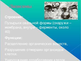 Лизосомы Строение: Пузырьки овальной формы (снаружи – мембрана, внутри – ферм
