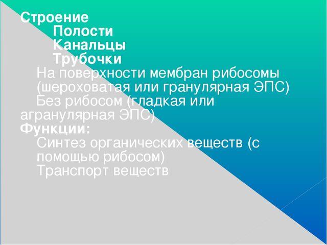 Строение Полости Канальцы Трубочки На поверхности мембран рибосомы (шероховат...