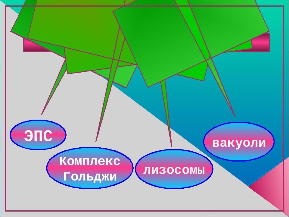 ВАКУОЛЯРНАЯ СИСТЕМА КЛЕТКИ лизосомы Комплекс Гольджи ЭПС вакуоли