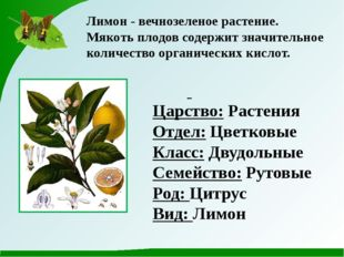 Лимон - вечнозеленое растение. Мякоть плодов содержит значительное количество