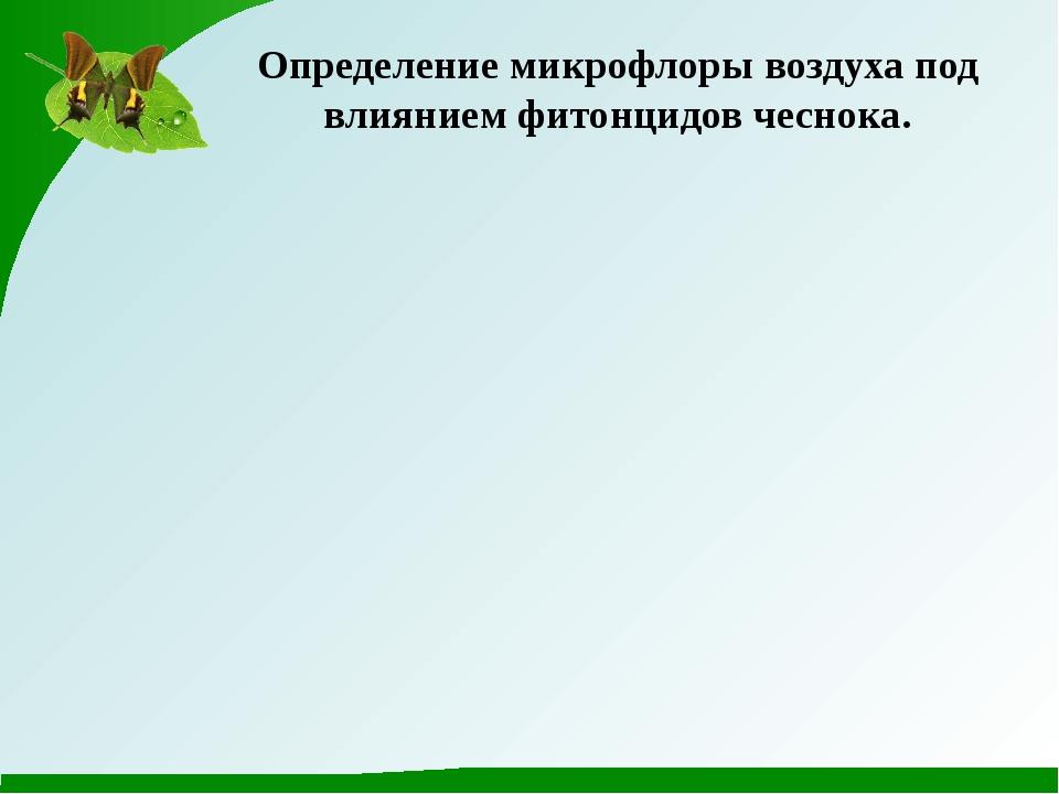 Определение микрофлоры воздуха под влиянием фитонцидов чеснока.