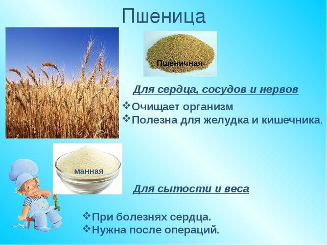 Пшеница Пшеничная Для сердца, сосудов и нервов Очищает организм Полезна для ж...